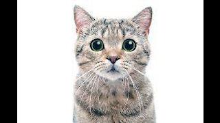 Cat Fun !!! Cute Animals ll Animal lover