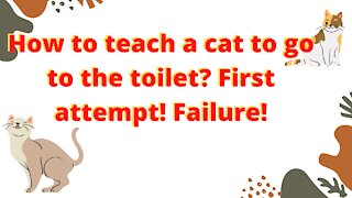 🔴🔴😱😱👉👉How to teach a cat to go to the toilet? First attempt! Failure!