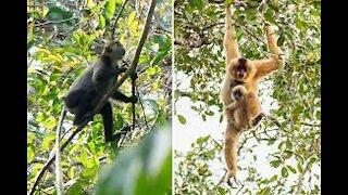 Monkey common