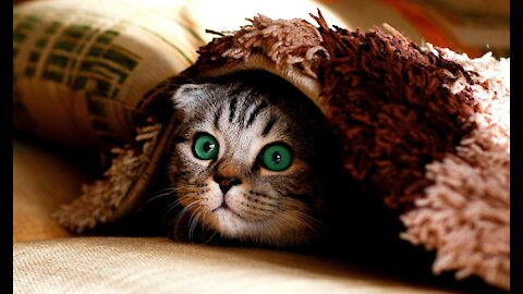 Cute Pets And Funny Animals Pets Garden - Love Animal