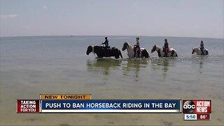 Push to ban horseback riding in the bay