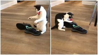 Cat won't let go of his new Christmas present
