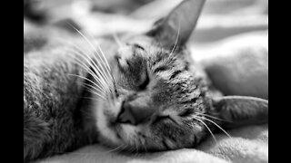 DEEP SLEEP MUSIC / MEDITATION MUSIC/ RELAXING / SLEEP MUSIC.
