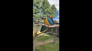 Hello parrot!