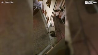 Bear attempts home invasion in Italy