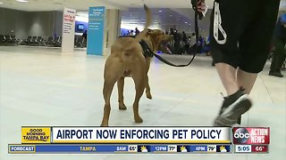 Tampa International Airport steps up enforcement of non-service animals