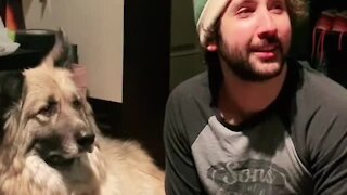 What happens if you call your dog when he's right next to you?