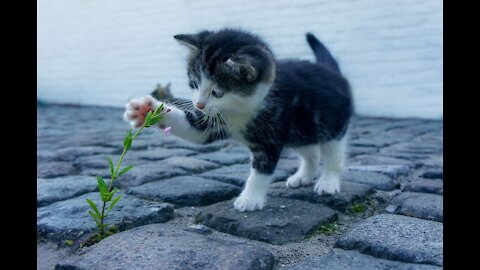 Funny and Cute Cat's Life Cats and Owners are the best