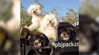 Doggy Uber! Watch As Pack Of Dogs Drive Around Desert In Automatic Car