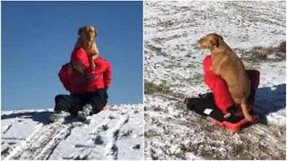 This dog loves sledding with his owner!