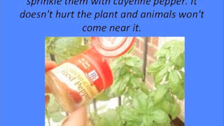 Best Home Remedies | Hints And Tips Around The House | DIY Remedies | MichaelWilliams67