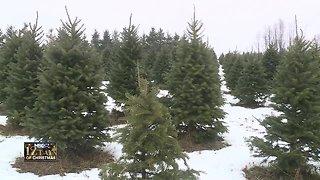 Christmas tree family farm