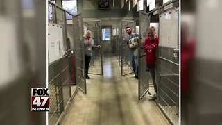 All dogs adopted from Jackson shelter