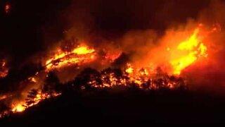 Flammer driver gjennom en skog i Italia