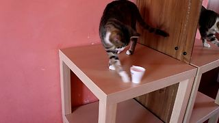 Rude cat knocks over anything placed on table