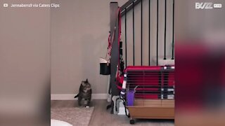 Cat gets stuck in stair rails 5