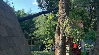 Un arbre tombe sur la cabane des enfants