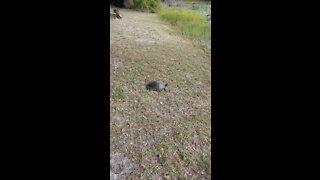 Old Florida Turtle