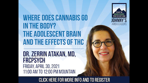 Where Does Cannabis Go in The Body? The Adolescent Brain and The Effects Of THC