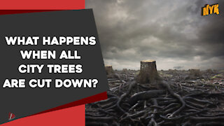 What Happens When All City Trees Are Cut Down *