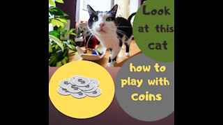 Beautiful cat play with coins