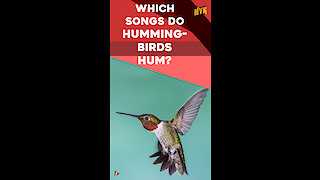 What You Should Know About Hummingbirds *