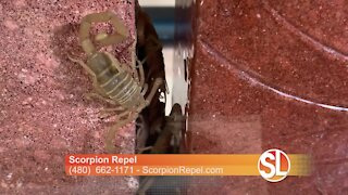 Scorpion Repel shows us how they keep scorpions out of your home