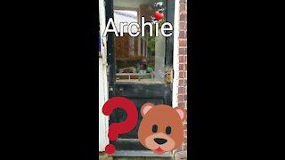 """"""" Boo ! """" ... I'm Archie"""