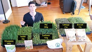 Microgreens Masterclass   Common Varieties   Full Week of Growing - What I Wish I Had When I Started