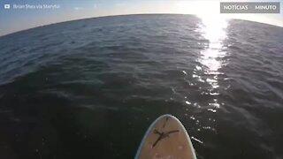 Encontro inesperado com baleia-jubarte em Nova Jersey