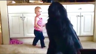 Toddler shows her huge Newfie puppy her toys