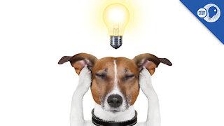 Stuff of Genius: No More Woof
