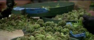 Lawsuit alleges bias in marijuana licensing in NV