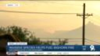 Catalina Mountain ecological diversity affects bighorn fire