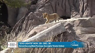 Denver Zoo - Zoo Lights
