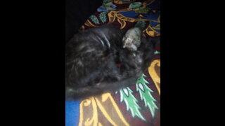 My cat is beautiful sleeping