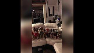 Magic Christmas ornament turns dogs into festive pups!