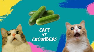 CATS against CUCUMBERS