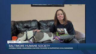 Kaden the dog is up for adoption at the Baltimore Humane Society