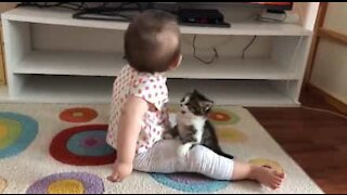 Kitten tries to play with baby in tender scene