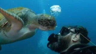 Turtle tries to eat diver's air bubbles