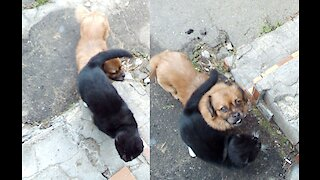 How the Cat protected the Dog