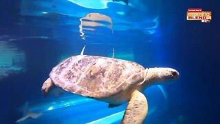 The Florida Aquarium   Morning Blend