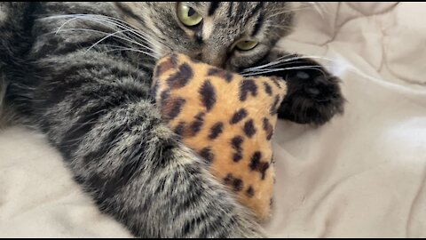 crazy cat and catnip pillow