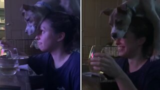 Pit Bull puppy makes it near impossible for owner to enjoy her meal