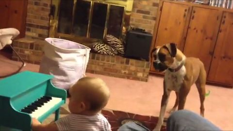Baby Girl Performs Musical Duet With Boxer Best Friend