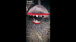 Oscar and his friend Shark