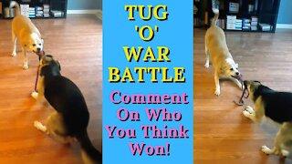 Dog best friends have epic tug-of-war battle