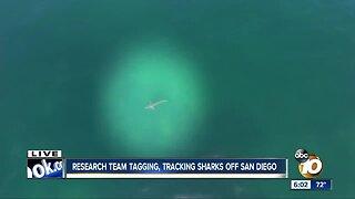 North San Diego County beachgoers warned about shark