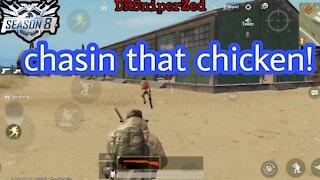 Chasin that chicken!